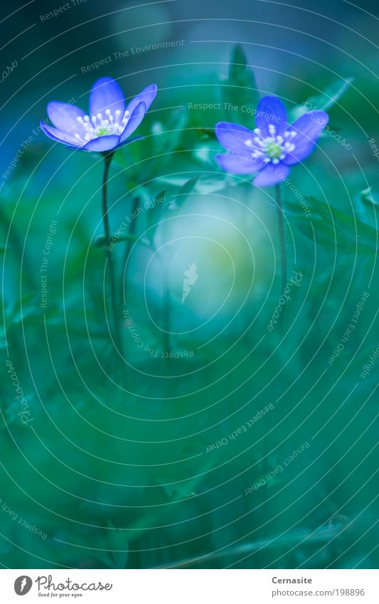Natur grün schön Pflanze Blume Wiese Gras Frühling Garten außergewöhnlich wild natürlich ästhetisch Europa Schönes Wetter weich