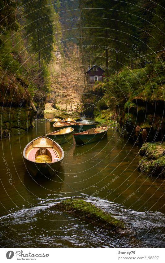An der Kamnitz Natur Wasser Baum grün ruhig Wald Erholung Holz Felsen Abenteuer Fluss Frieden Freizeit & Hobby Idylle Hütte