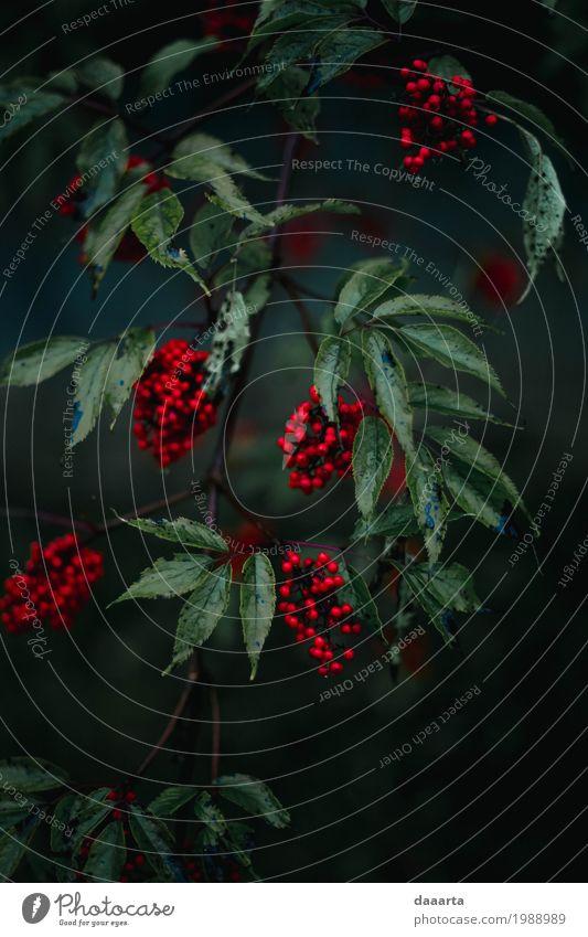 Nachtbeeren R Natur Pflanze Sommer schön Baum Blatt Freude Umwelt Wärme Leben Lifestyle Herbst natürlich Stil Garten Freiheit