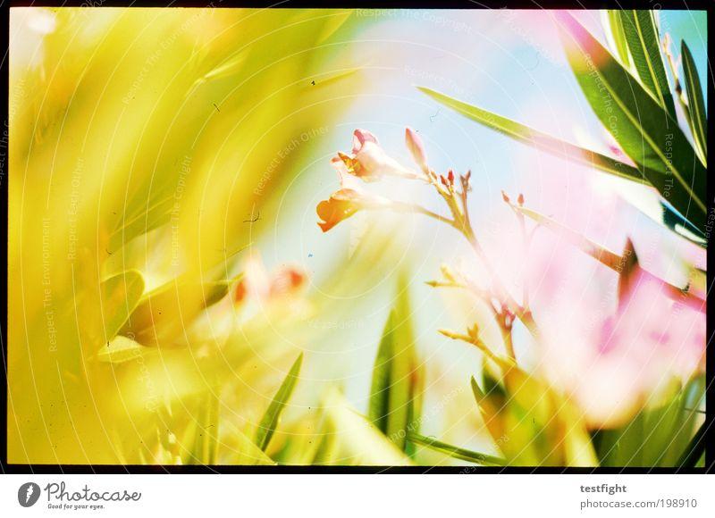 i can be a frog Sonne Blume Pflanze Sommer Blatt Tier Blüte Farbstoff Wärme frisch Sonnenstrahlen Freundlichkeit Duft Licht