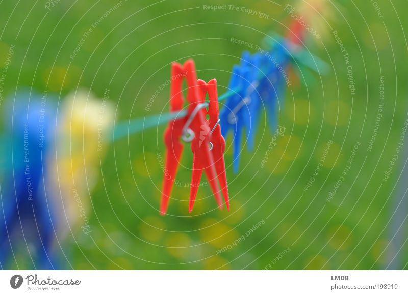 Heute keine Wäsche gewaschen Kunststoff blau mehrfarbig gelb grün rot Wäscheleine Wäscheklammern Waschtag aufhängen Blumenwiese Sommer Klemme zwicken