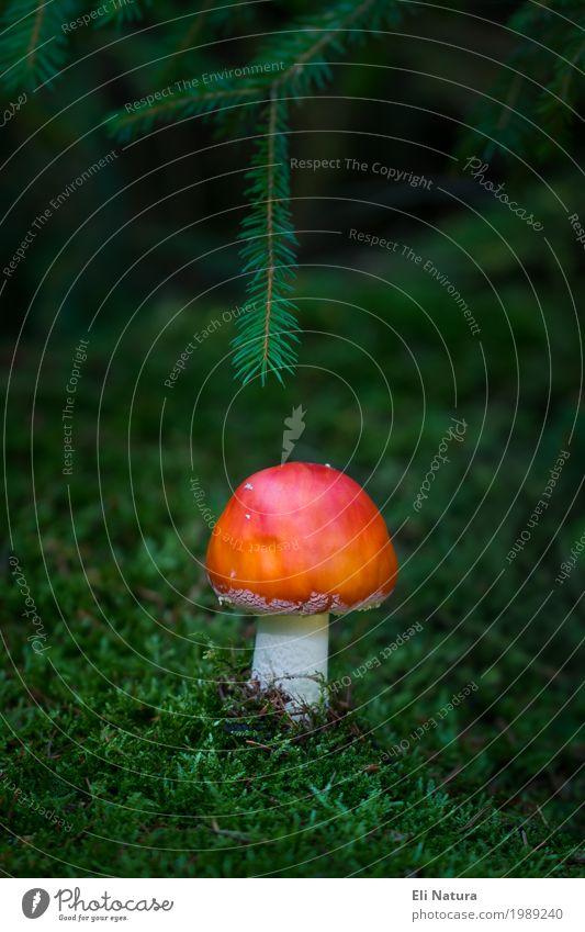 Ein Männlein steht im Walde ... Natur Pflanze grün weiß rot Tier Herbst Glück Freiheit orange wild Freizeit & Hobby Ausflug wandern Erde