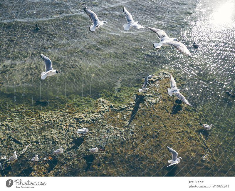 komm ins schwärmen Urelemente Sand Wasser Schönes Wetter Seeufer Wildtier Vogel Schwarm fliegen Schwimmen & Baden frei Freude Glück Fröhlichkeit Leidenschaft