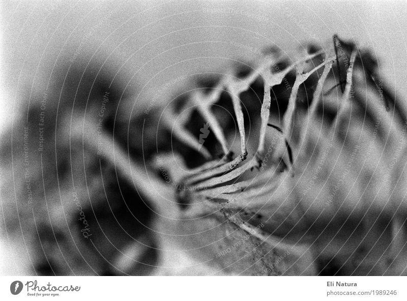 Vergängnis Natur weiß Tier dunkel schwarz Tod grau Vogel Angst Vergänglichkeit geheimnisvoll Schmerz Verfall gruselig Verzweiflung analog