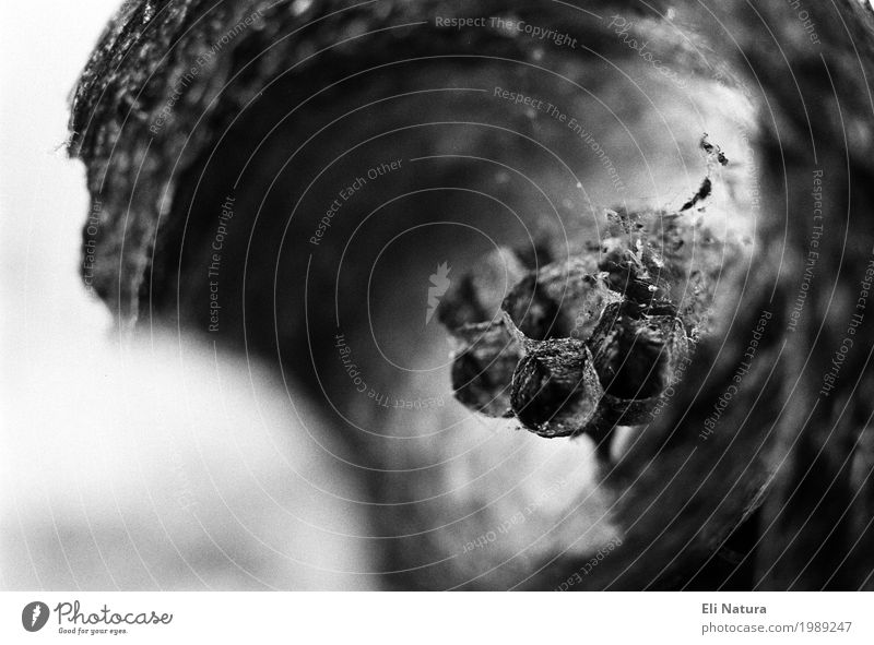 Wabe Natur Luft Sommer Herbst Garten Wiese Wald Biene Wespen Motte Kokon Bienenwaben Nest alt ästhetisch bedrohlich dunkel trist grau schwarz weiß Verfall