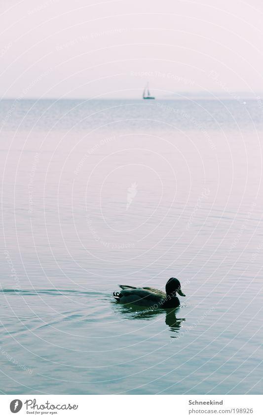 Allein auf hoher See harmonisch Erholung ruhig Ferien & Urlaub & Reisen Ferne Freiheit Umwelt Natur Landschaft Urelemente Wasser Meer Tier Wildtier 1 beobachten