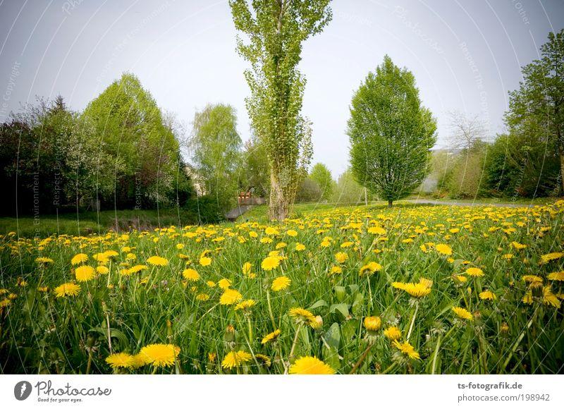 Auf der Wiesn Natur Ferien & Urlaub & Reisen Pflanze grün schön Sommer Baum Erholung Landschaft ruhig Umwelt gelb Frühling Wiese Glück Garten