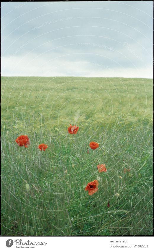 analoger Farbrausch Himmel Natur schön rot Pflanze Blume Freude Wolken Landschaft Luft ästhetisch Klima Wachstum leuchten Lifestyle Unendlichkeit