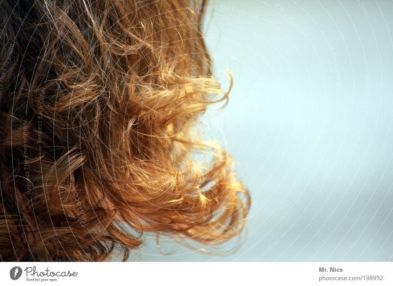 curls schön Sommer Wärme Haare & Frisuren elegant natürlich einzigartig Locken Duft Friseur langhaarig rothaarig Intimität Haarsträhne Lockenwickler Mensch