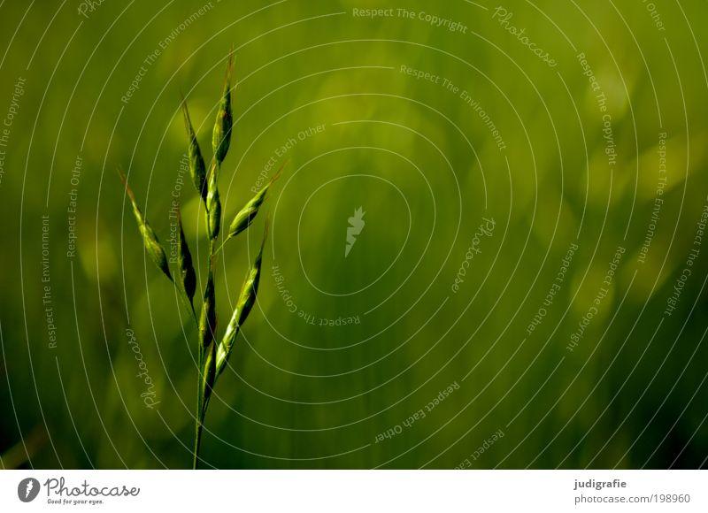 Gras Natur grün Pflanze Sommer Wiese Park Umwelt frisch Wachstum weich dünn einzigartig natürlich Duft