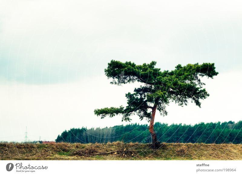 zerzaust Natur Pflanze Baum Landschaft Wald natürlich Wind Flussufer zerzaust Cross Processing Böschung