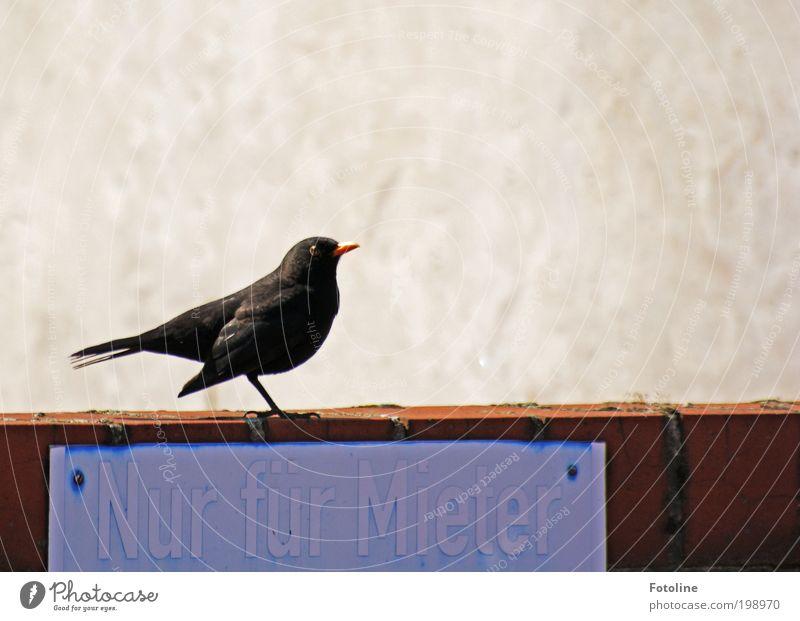 Nur für Mieter Tier Luft Sommer Klima Wetter Schönes Wetter Wärme Wildtier Vogel Tiergesicht Flügel 1 blau schwarz Mauer Schilder & Markierungen Schnabel Feder