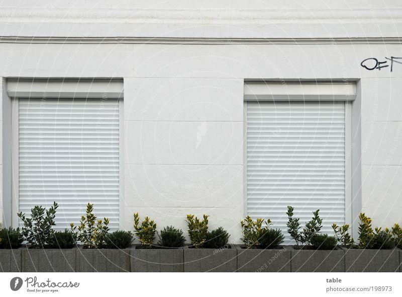 Vorstadtidyll Pflanze weiß Haus Fenster schwarz Wand Graffiti Mauer Holz grau Stein Fassade Metall Häusliches Leben Angst Ordnung