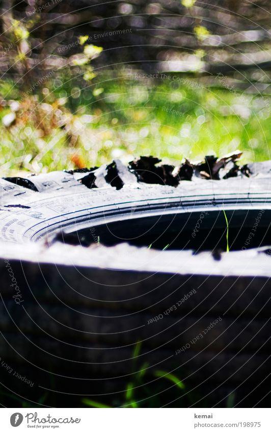 Grashalm Natur grün Pflanze Sommer schwarz Umwelt Wiese Wärme liegen Wachstum kaputt Sträucher Spitze Schönes Wetter Güterverkehr & Logistik