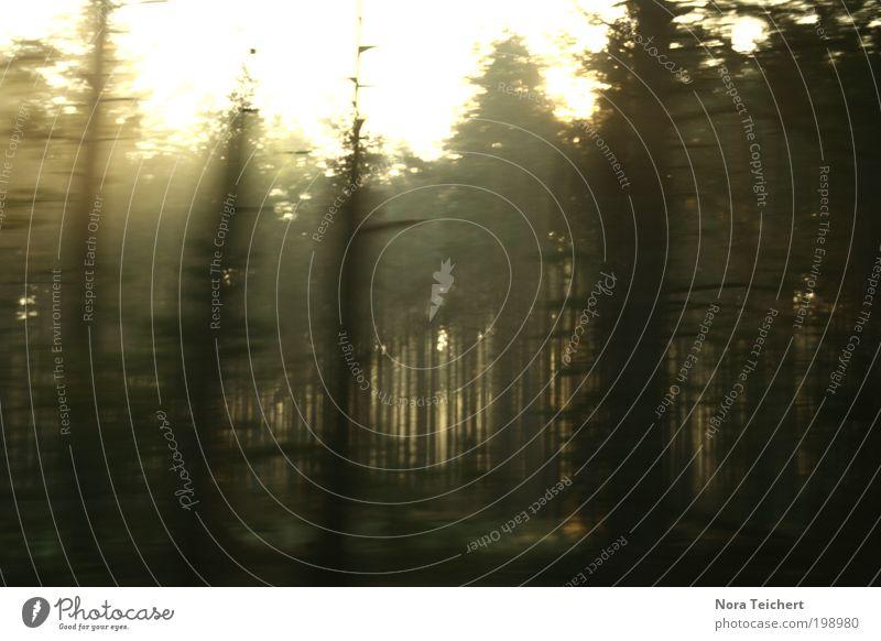 ¿Geisterwald? Natur Baum Pflanze Sommer Einsamkeit Wald Umwelt Landschaft Bewegung Wege & Pfade träumen Stimmung Angst Klima Geschwindigkeit leuchten