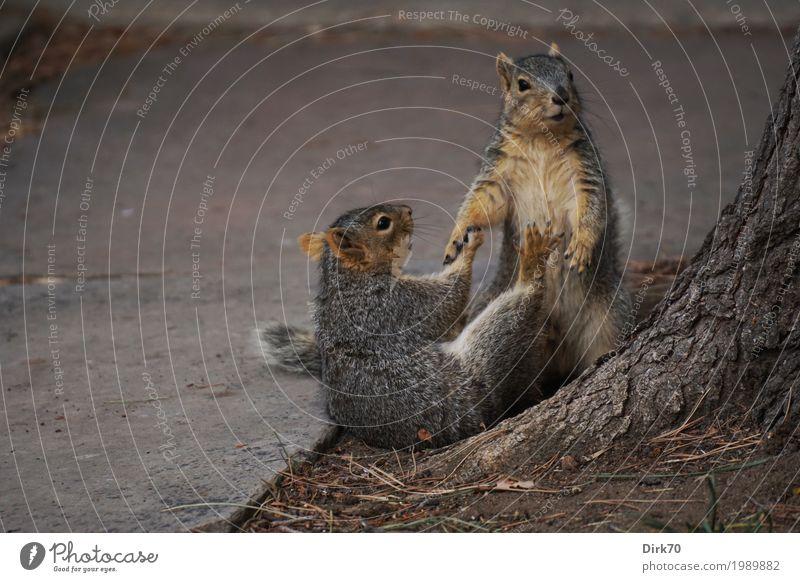 Handreichung. Natur Stadt Baum Tier Winter Umwelt Leben Frühling Wege & Pfade Spielen Garten Park Tierpaar Wildtier Lebensfreude niedlich