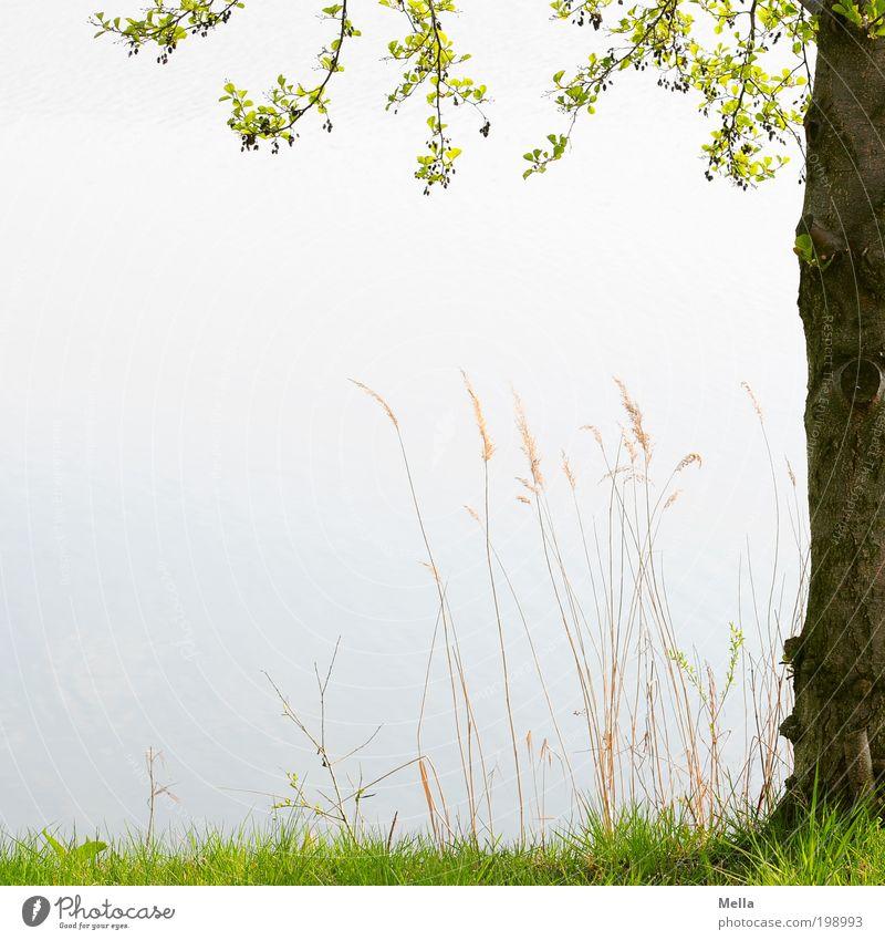 Ein Platz für dich und für mich Natur Baum Pflanze ruhig Erholung Wiese Gras Frühling See Stimmung Umwelt Platz Wachstum Pause Romantik natürlich