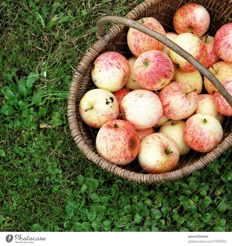Sommeräpfel Lebensmittel Frucht Apfel Ernährung Picknick Bioprodukte Vegetarische Ernährung Korb Gesundheit Häusliches Leben Garten Herbst Pflanze Gras