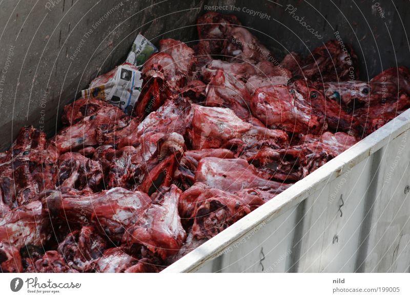 Nix für Vegetarier Lebensmittel Fleisch Ernährung Metzger Schlachthof Tier Nutztier Totes Tier Kuh Tiergruppe Ekel rot Tod Todesangst Reichtum Schlachtung