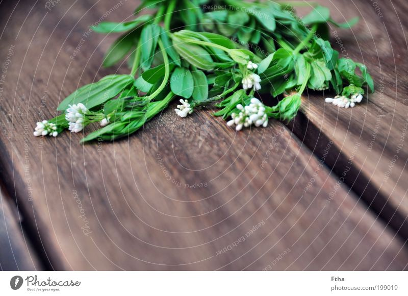 Waldmeisterlich grün Blüte Lebensmittel Kräuter & Gewürze Grünpflanze aromatisch Heilpflanzen Alternativmedizin mehrfarbig