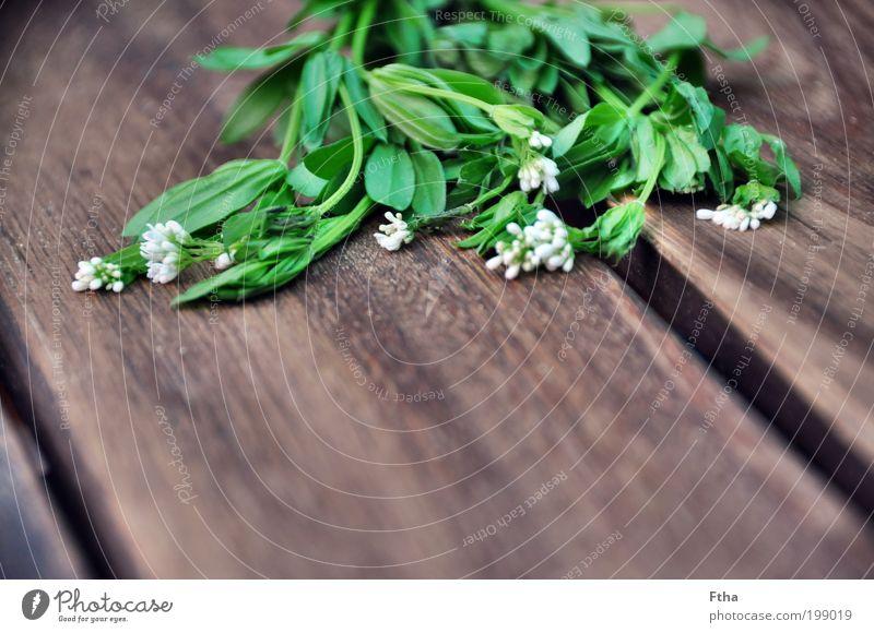 Waldmeisterlich Lebensmittel Kräuter & Gewürze aromatisch grün Grünpflanze Blüte Heilpflanzen ätherisch mehrfarbig Menschenleer Textfreiraum unten