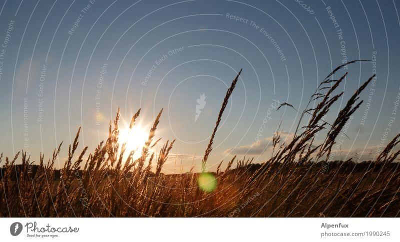 Einen Sundowner bitte Umwelt Natur Landschaft Tier Himmel Wolken Sonne Sonnenaufgang Sonnenuntergang Sonnenlicht Sommer Schönes Wetter Gras Wiese Feld Küste