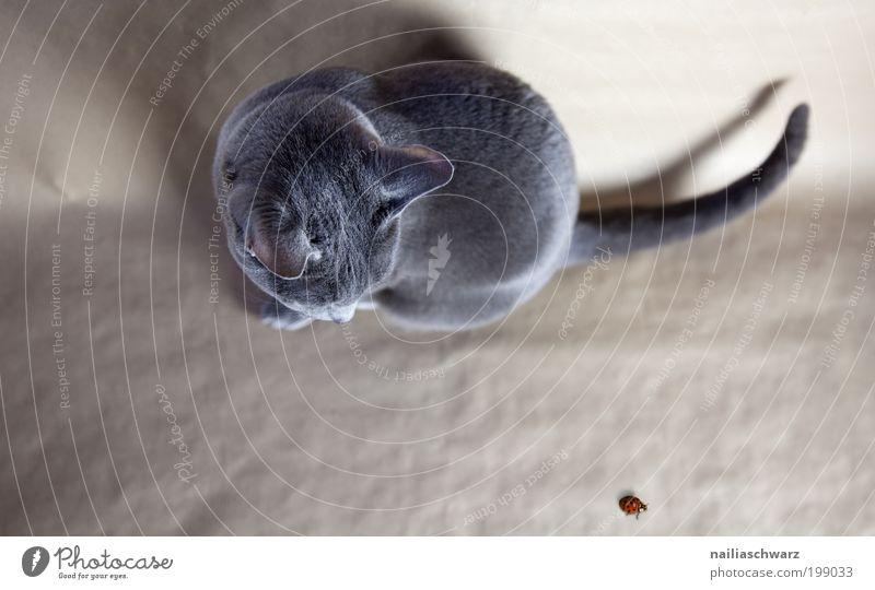 Guck mal wer da krabbelt ... Natur rot Tier oben grau Katze braun lustig elegant sitzen ästhetisch nah beobachten Wildtier niedlich silber