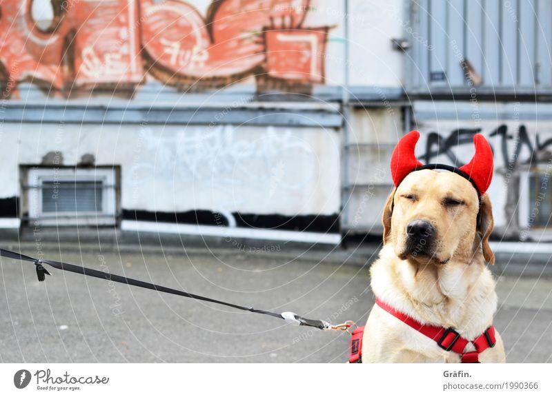 [HH17 Fähnchentour] Wat willste? Hund rot Tier Freude Religion & Glaube Wand Graffiti lustig Mauer grau Fassade authentisch warten niedlich Coolness Haustier