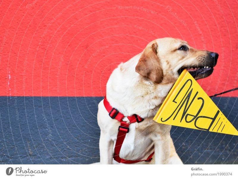 [HH17 Fähnchentour] Der Tag an dem Mo das Stöckchen fraß... Hund blau Stadt rot Tier Freude gelb Wand lustig Mauer Stein Stimmung Schriftzeichen