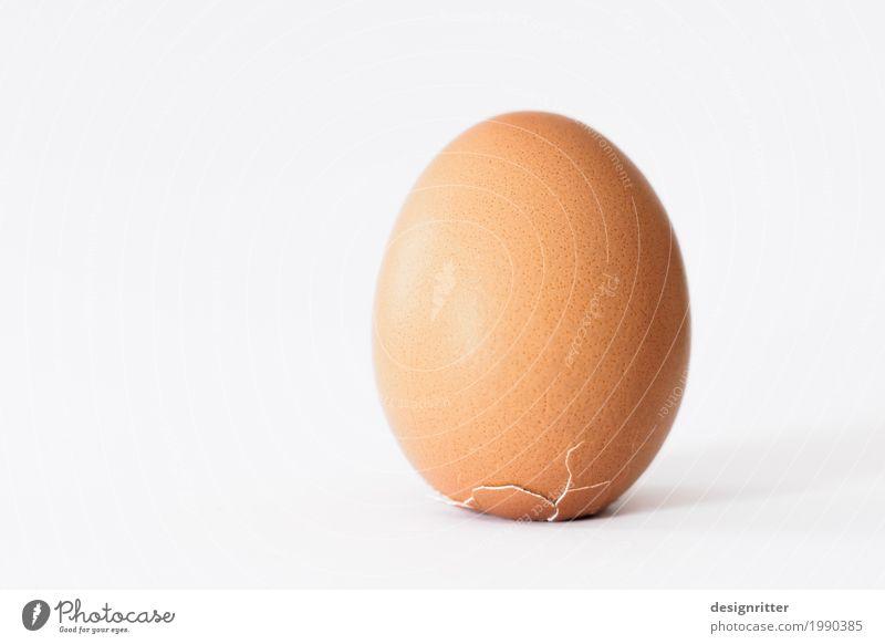 Durchbruch Lebensmittel Ei Osterei Eierschale Ernährung Frühstück Bioprodukte Vegetarische Ernährung Feste & Feiern Ostern Haustier Nutztier Haushuhn 1 Tier