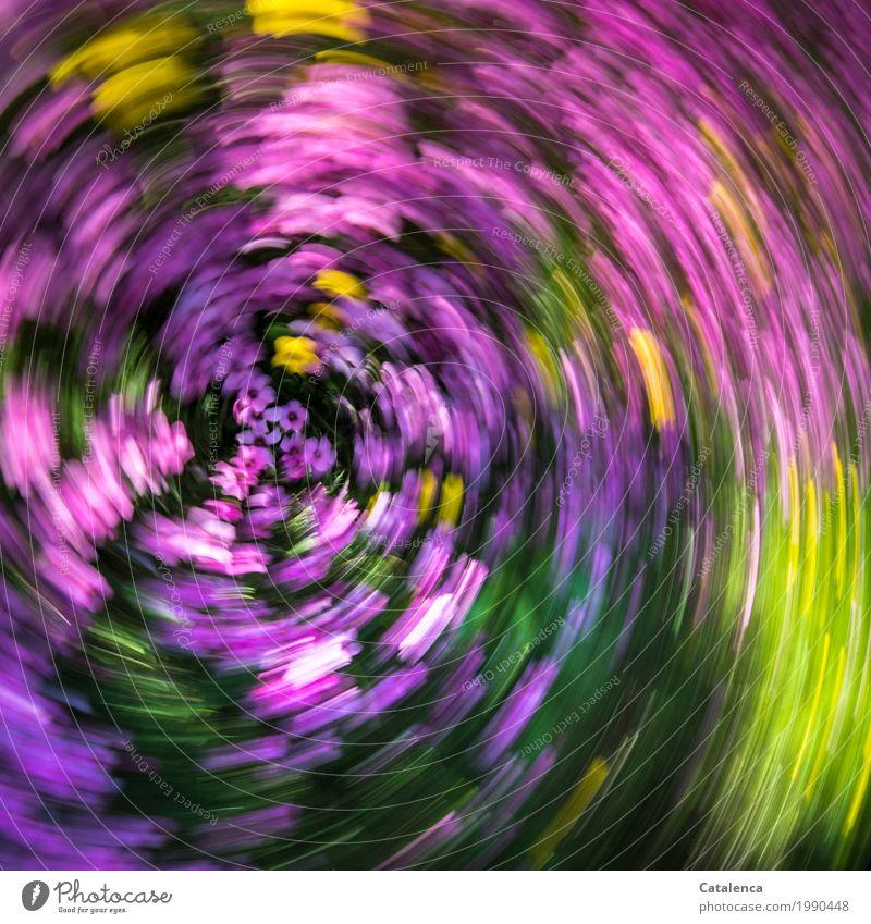 Kreisel Natur Pflanze Sommer Blume Macachines Garten Wiese Blühend Duft ästhetisch gelb grün rosa Stimmung Freude Fröhlichkeit Lebensfreude Bewegung Design