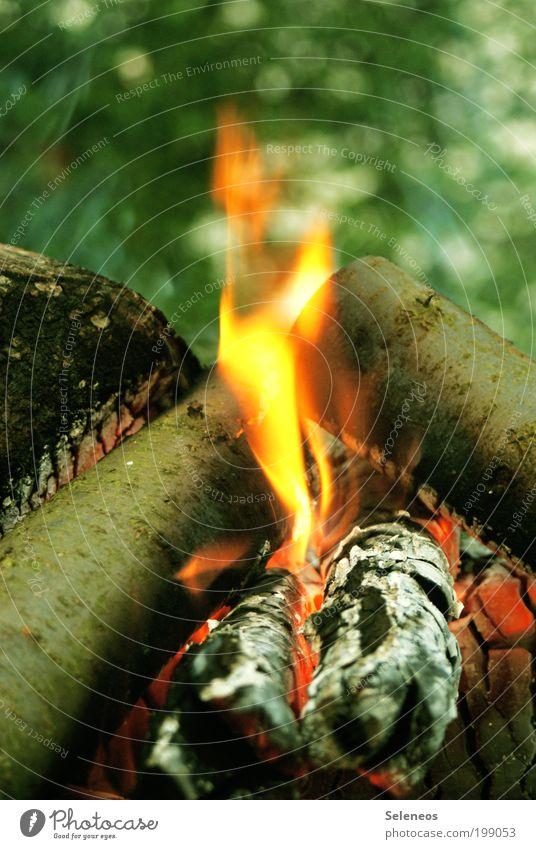 da brennt der Weihnachtsbaum Natur Baum Pflanze Freude Ferien & Urlaub & Reisen Erholung Holz Wärme Kraft Freizeit & Hobby Brand Feuer heiß leuchten Grillen