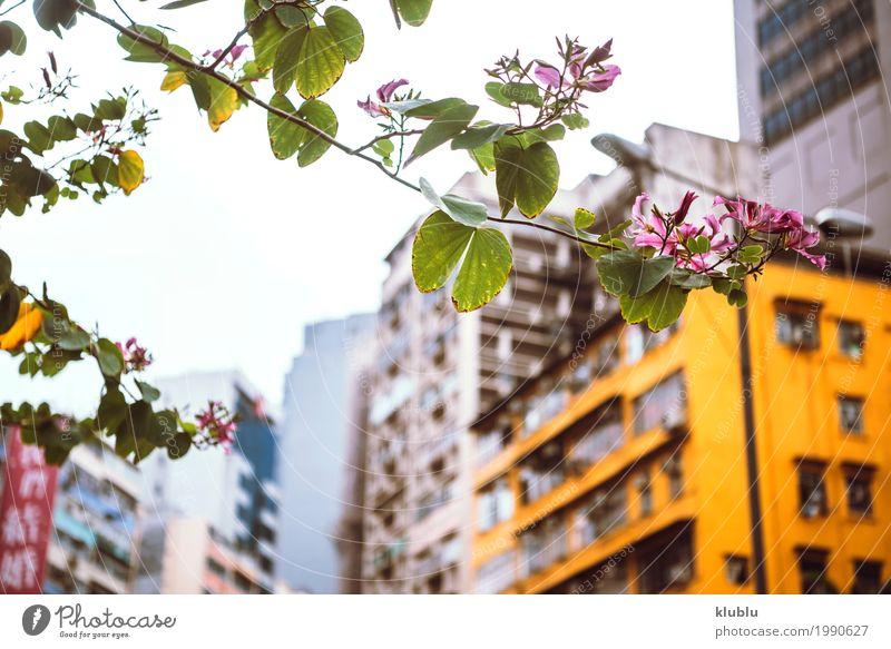 Kleine städtische Blume Himmel Natur Ferien & Urlaub & Reisen Pflanze schön grün Baum Landschaft Architektur Leben Gebäude klein Tourismus Park Ausflug