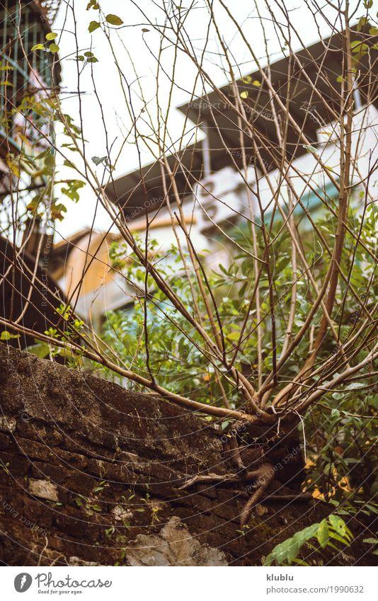 Ein Gestrüpp wächst in der Stadt Garten Dekoration & Verzierung Natur Landschaft Pflanze Himmel Baum Gras Park Straße Wachstum grün Buchse urban leer laublos