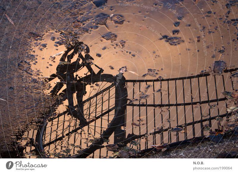 inMotion Lifestyle Leben Freizeit & Hobby Fahrrad Erde Sonnenaufgang Sonnenuntergang Park Verkehr Pfütze Wasser entdecken träumen Unendlichkeit einzigartig