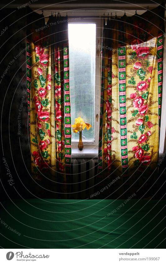 ein halbes Jahr zurück Wohnung Dekoration & Verzierung Raum Wohnzimmer Sonnenlicht Blume exotisch trendy einzigartig Kitsch trashig gelb grün rosa rot