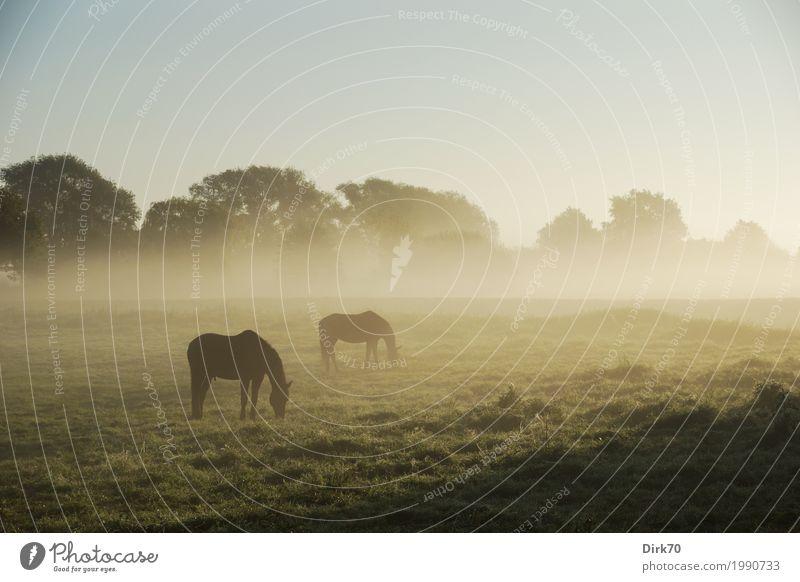 That perfect morning ... Natur Sommer schön Landschaft Tier ruhig Wald Umwelt Herbst Wiese natürlich Nebel ästhetisch Idylle stehen fantastisch