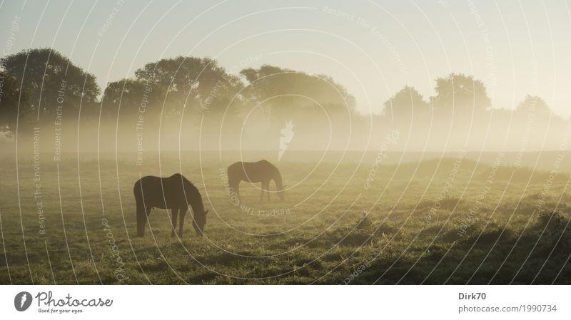 Pferde im Herbstnebel Landwirtschaft Forstwirtschaft Umwelt Landschaft Klima Schönes Wetter Nebel Baum Gras Wiese Feld Weide Bremen Stadtrand Tier Nutztier 2