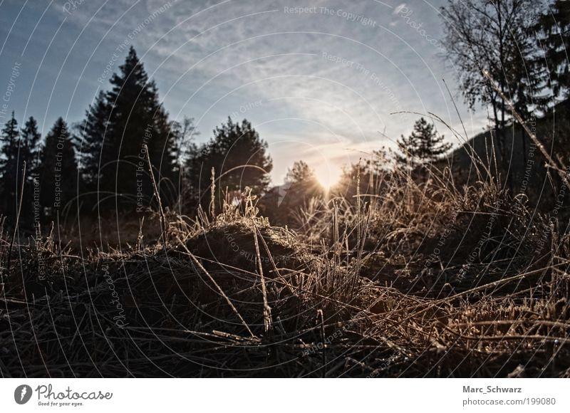Morgenfrost im Sonnenaufgang Natur Himmel Baum Wald Herbst Gras Landschaft Feld Umwelt Energie Erde Europa Schönes Wetter Österreich