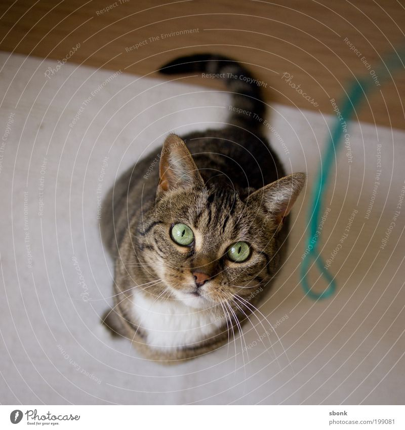 katzenkitsch Tier Spielen Bewegung Katze warten Energie beobachten Jagd Fressen Haustier hocken