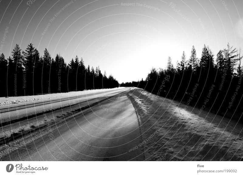 luosto XXI Himmel Natur Baum Pflanze Sonne Ferien & Urlaub & Reisen Winter Ferne Wald Straße kalt Schnee Freiheit Landschaft Umwelt Eis