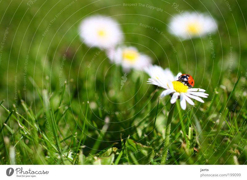 Zeit zum... Natur Blume ruhig Tier Wiese Gras Frühling Garten frei Idylle Gelassenheit Wildtier Marienkäfer Käfer