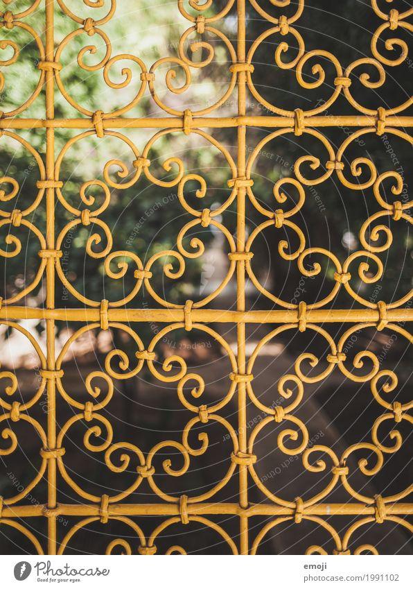 Gitter Natur Sommer Schönes Wetter Park ornamental gelb Kitsch Farbfoto Außenaufnahme Detailaufnahme Muster Menschenleer Tag Schwache Tiefenschärfe