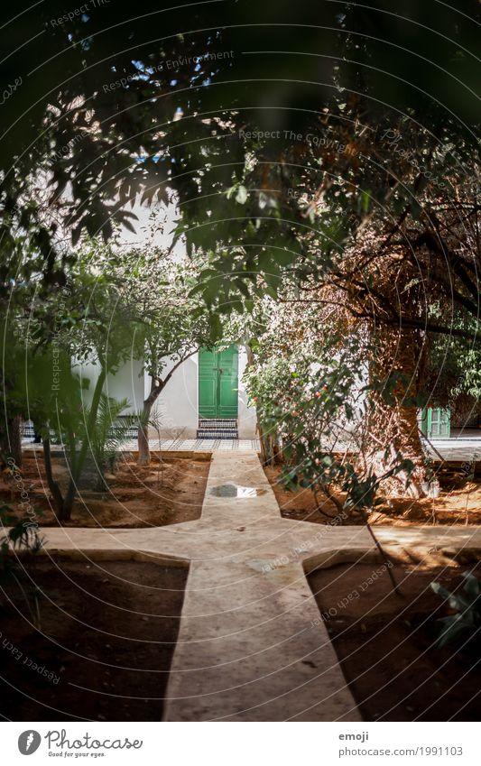 Marokko Natur Pflanze Sommer Umwelt Wärme natürlich Garten Park Schönes Wetter