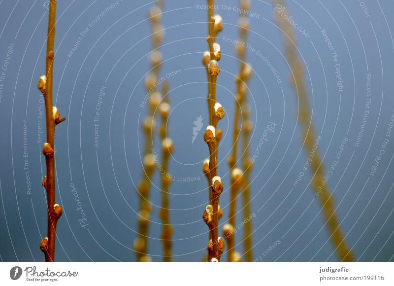 Etwas Frühling Umwelt Natur Pflanze Klima Baum Park Wachstum frisch natürlich neu weich blau Stimmung Glück Leben Lebensfreude Leichtigkeit Zweig Weide