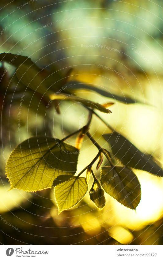 Natur Pflanze Baum Sonne Blatt Freude Frühling Freiheit Zufriedenheit Kraft Fröhlichkeit Warmherzigkeit Coolness Frieden Vertrauen Geborgenheit