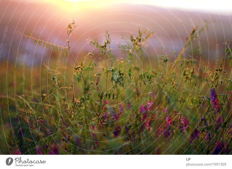Frühlingsblumen während des Sonnenaufgangs Ferien & Urlaub & Reisen Pflanze schön Erholung ruhig Ferne Leben Lifestyle Blüte Gefühle natürlich Garten Park