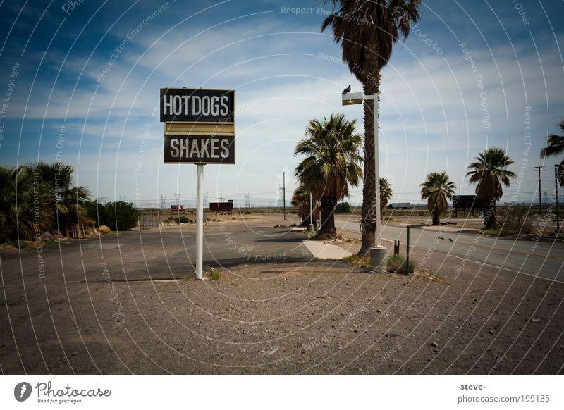 Yummie Natur Sand Palme Wüste blau braun Diner Restaurant Hotdog Nevada USA Farbfoto Außenaufnahme Menschenleer Tag