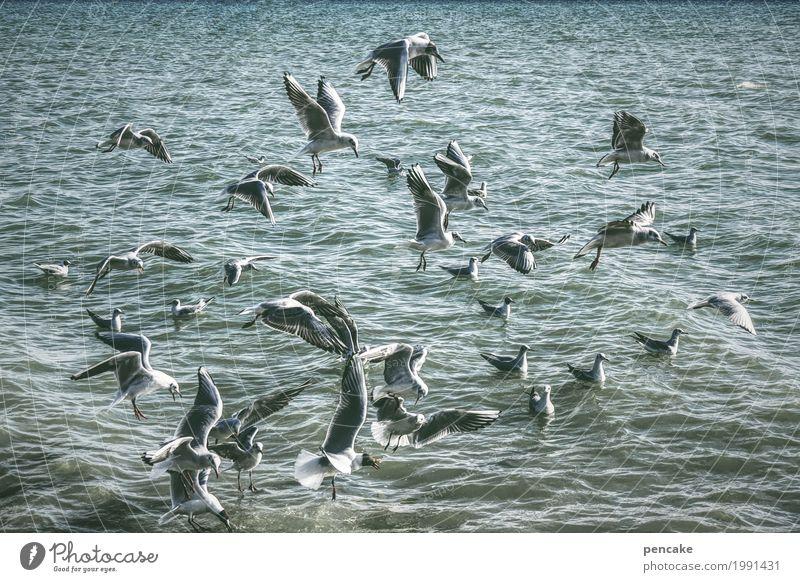 wimmelbild Natur Landschaft Urelemente Wasser Schönes Wetter Wellen See Wildtier Vogel Schwarm fliegen Schwimmen & Baden Möwenvögel wimmeln viele Bodensee