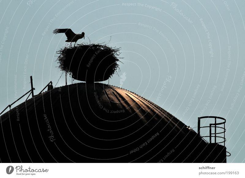 Kochtopfdeckel Tier Schönes Wetter Bauwerk Dach Wildtier Vogel Flügel bauen Jagd ästhetisch oben Storch Nest Nestbau Nestwärme Kuppeldach Industriekultur Licht